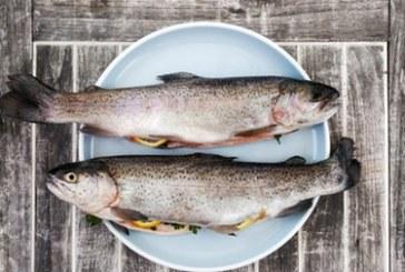ЕС вече изяде годишните си рибни запаси