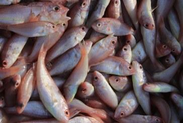 Повече от 7 т. риба е конфискувана при проверки