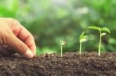 Кога и как да засеем семената за производство на разсад