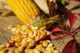 С 30,6 % по-високи са средните добиви от царевица за 2018 г