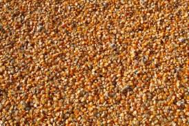 Осъществиха се сделки при царевицата на 250 лв./тон
