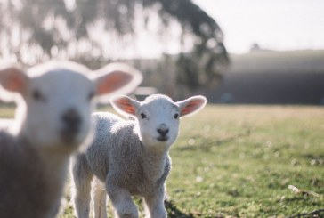 Ветеринари дискутират относно здравето на животните