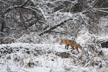 Предвиждат се промените в правилника за прилагане на Закона за лова