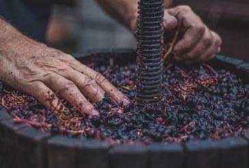 Винарските изби кандидатстват за инвестиции в предприятия от 16 март 2020 г.