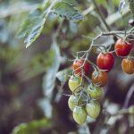 Вижте срока за доказване на реализацията на плодове и зеленчуци
