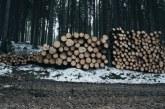 85 % от дървата за огрев са раздадени в Балчишко