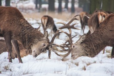 Представяме България като топ дестинация за ловен туризъм