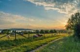 Земеделците в Област Пловдив са получи над 1. 1 млрд. лв. финансова подкрепа за последните пет години