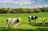 През октомври ще се доказват реализираното мляко и животни