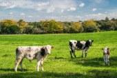 Виртуални ли са животни в стопанствата у нас