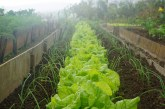 ООН защитава здравето на растенията