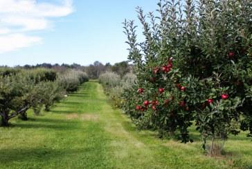 Следцъфтежни пръскания при овощните култури срещу болести и неприятели