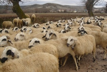 ЕС одобри облекченият контрол заради чумата по ДПЖ
