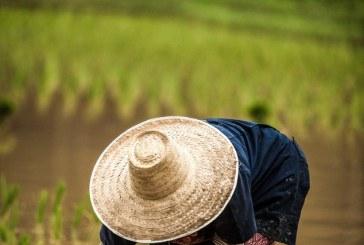 ЕК даде глътка въздух на оризопроизводителите от ЕС