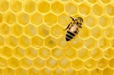 Все повече пчелари алармират за висока смъртност