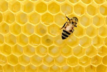 Драстичните температурни разлики притесниха пчеларите
