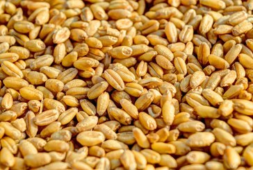 Сделките с пшеница повишиха цените й у нас