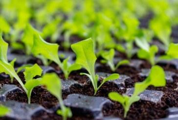 Доходите и продукцията в селското стопанство в България намаляват