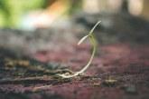 Възможност за авансово плащане за инвестиции в растениевъдството