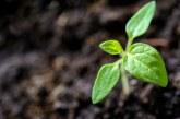 Предложение: По-голяма гъвкавост и субсидиарност за зелените мерки в земеделието