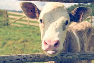 Приети са окончателните промени в Закона за животновъдството