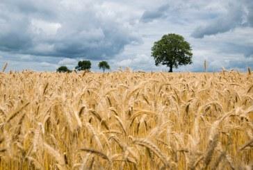 Земеделски развитите области са най-бедни