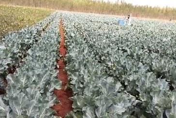 Как креативен фермер реши да опази реколтата си