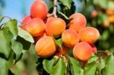 Значителен ръст на годишна база бележи производството на лавандула и кайсии