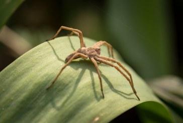 Могат ли паяци да контролират разпространението на болестите по растенията