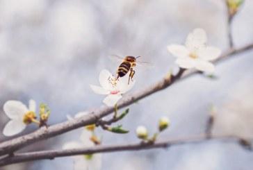 Рязко застудяване би навредило сериозно на пчелите
