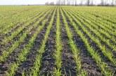 Ще се наблюдава поникване, трети лист и фаза братене при пшеницата