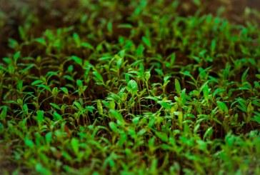 130 проекта за над 10,5 млн. лв. са заявени по Схемата за държавна помощ за инвестиции в растениевъдството
