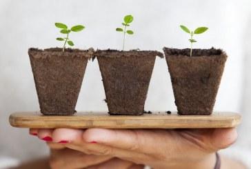 Защо кобалтът е важен за растенията