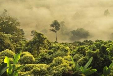 Как вредим на биоразнообразието