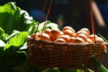 Усетено е намаление в цената на яйцата в Разград и Русе