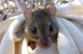Първи изчезнал вид заради климатичните промени