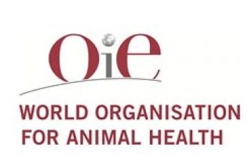 Влизат в сила нови стандарти за здравеопазването на животните