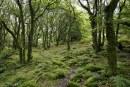 Нова наредба регламентира дейностите по защита на горските територии от болести и вредители
