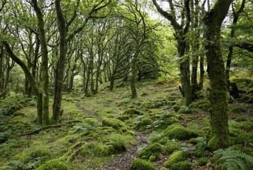 Над 75 000 проверки са се извършили в горите от началото на годината