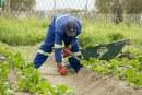 """Инспекцията по труда в Благоевград откри редица нарушители в отрасъл """"Растениевъдство"""""""