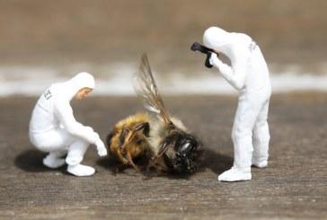 Кой е отговорен за опазването и защитата на пчелите