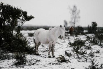 До 5 000 лв. глоба грози фермера изоставил конете си в планината