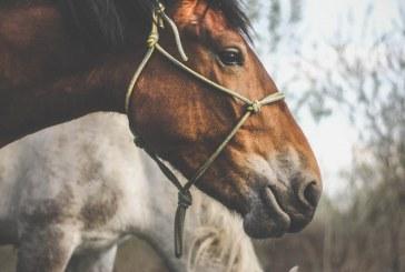 Ограничава се свободното движение на коне на територията на община Дупница