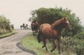 Разследват случай с мъртви коне