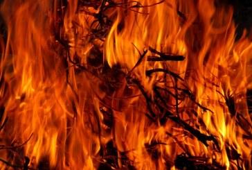 900 oвощни дървета изгоряха при пожар в ломско село
