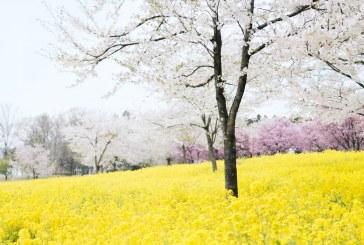 В пъти по-бързо се движи сеитбата на пролетниците тази година