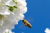 Кои са медоносните растения в България