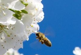 Предстоят растителнозащитни практики в Шумен