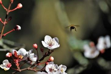 Германия изготви план на защита на насекомите