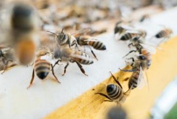 За какво пчеларите ще получават по 6,4 млн. лв. годишно